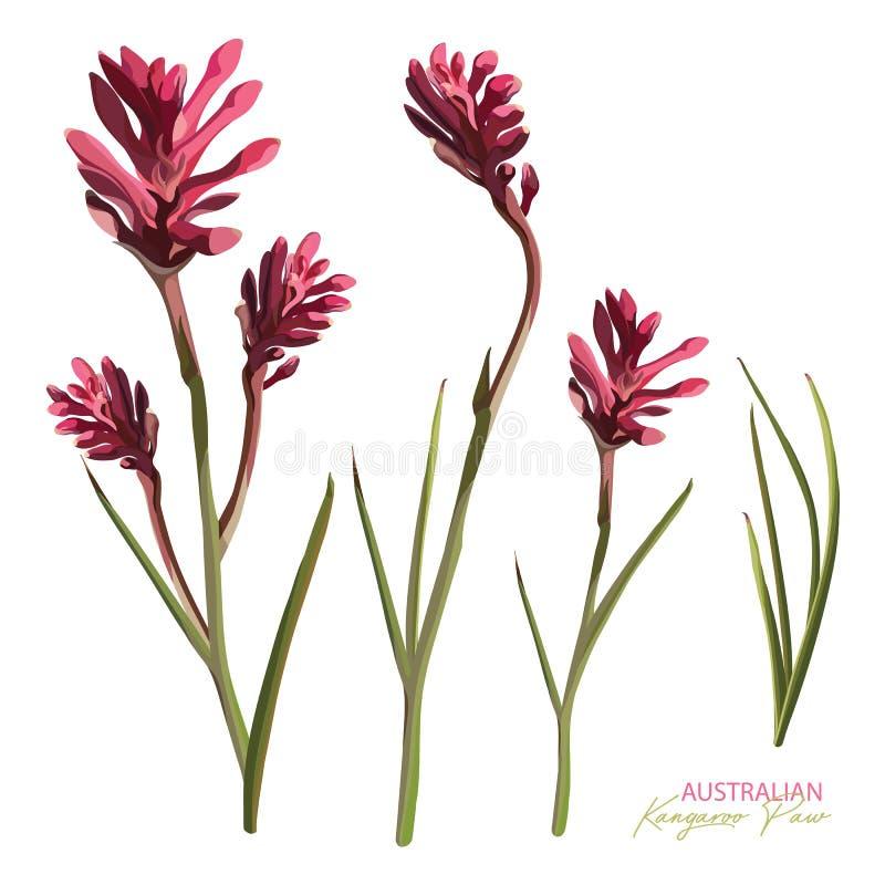 Den realistiska uppsättningen av den rosa blomningkängurun tafsar vektor illustrationer