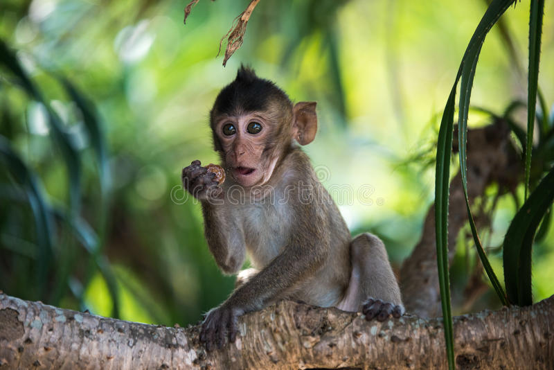 Den roliga apan behandla som ett barn på träd royaltyfria bilder