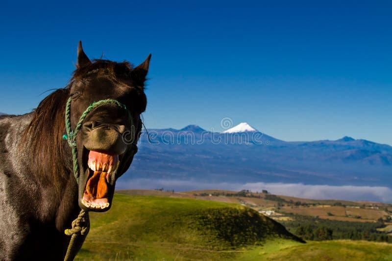 Den roliga hästen med ett enfaldigt uttryck på det är framsidan fotografering för bildbyråer