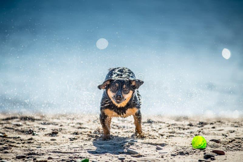 Den roliga hunden spelar nära vatten, plaskande små droppar arkivfoto