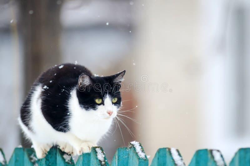 den roliga inhemska kattungen sitter på ett trästaket i byn i trädgården under ett snöfall royaltyfri foto