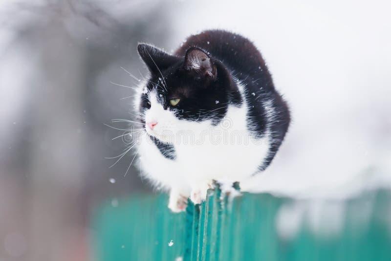 den roliga inhemska kattungen sitter på ett trästaket i byn i trädgården under ett snöfall och blickar in i avståndet royaltyfri bild