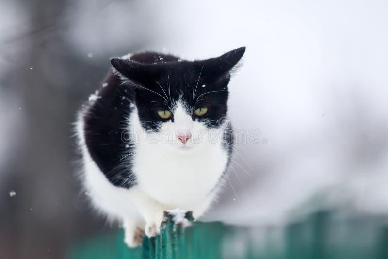 Den roliga inhemska kattungen sitter på ett trästaket i byn i trädgården under ett snöfall och blickar framåt royaltyfri fotografi
