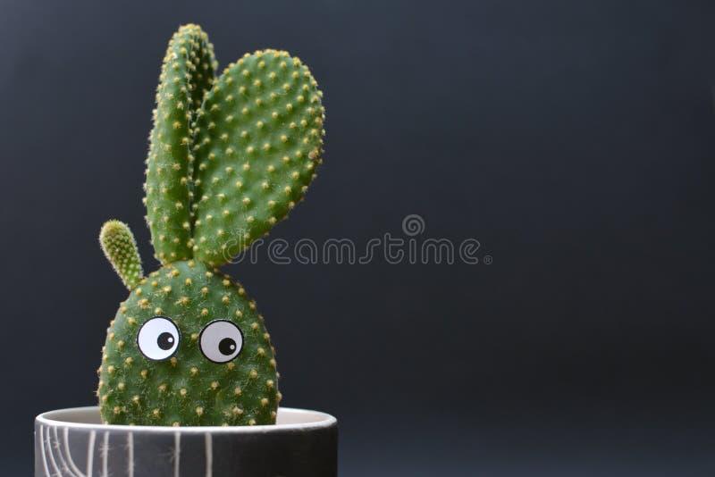 Den roliga inlagda Opuntiamicrodasyskaninen gå i ax kaktuns med googly ögon framme av mörk bakgrund royaltyfri foto