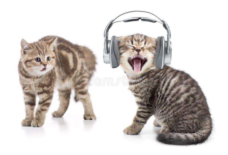 Den roliga katten i lyssnande musik för hörlurar och en annan katt är chockade vid denna arkivfoton