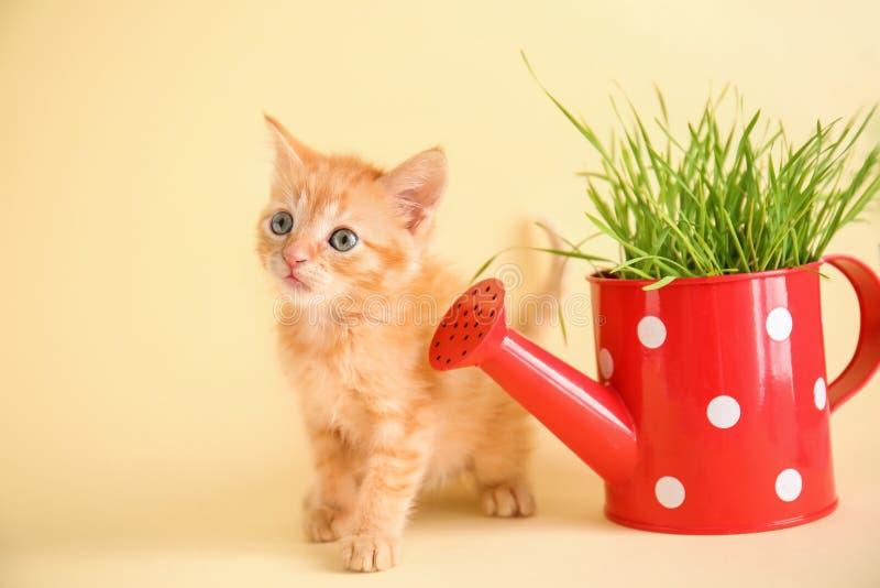 Den roliga kattungen med växten, i att bevattna kan på färgbakgrund royaltyfri fotografi