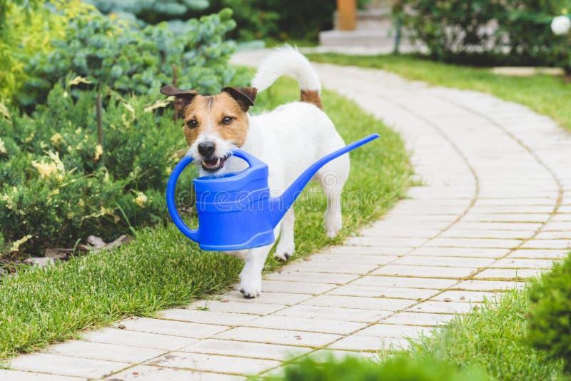 Den roliga trädgårdsmästaren med bevattna kan danandebevattning arkivbild