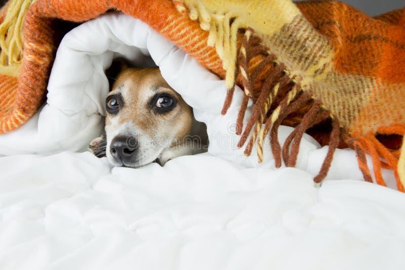 Den roliga vila hunden tystar ned arkivbilder