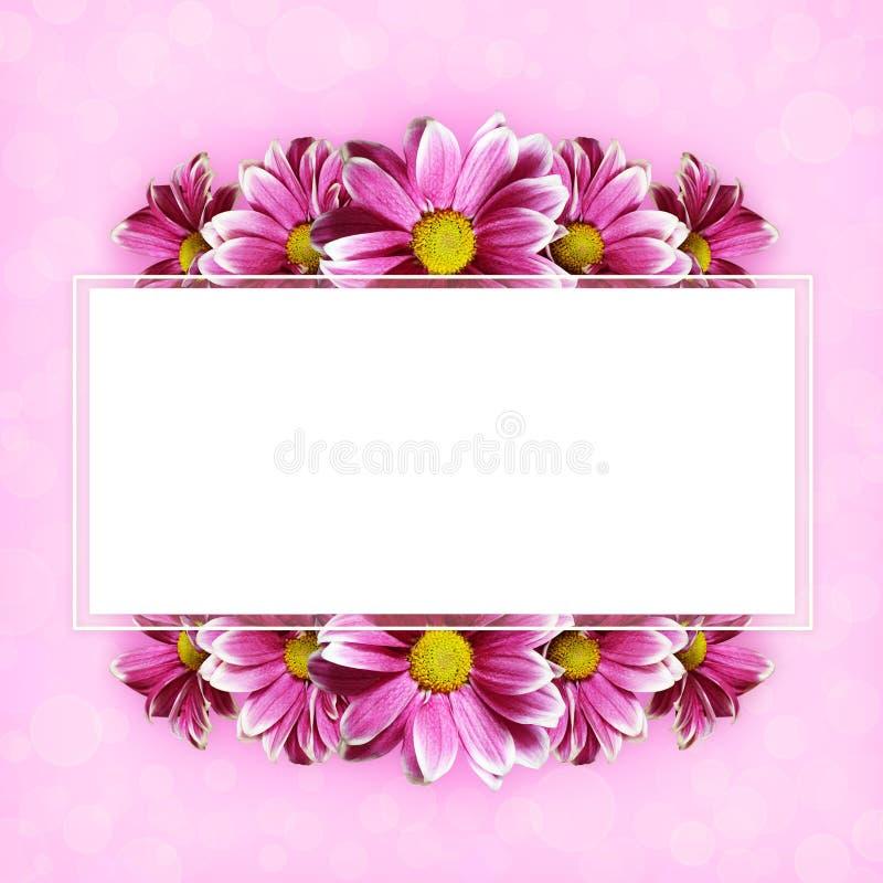 Den rosa aster blommar bakgrund och en ram vektor illustrationer