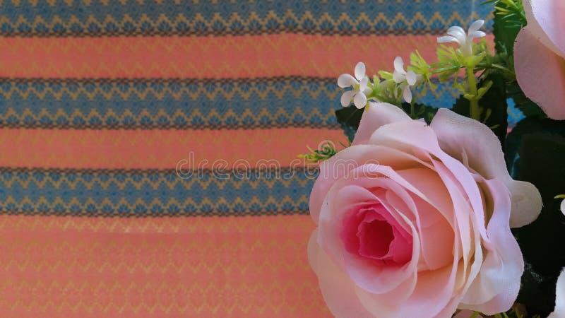 Den Rosa hybridadrottningen av blomman steg royaltyfri foto