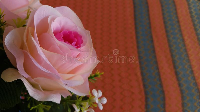 Den Rosa hybridadrottningen av blomman steg arkivbild
