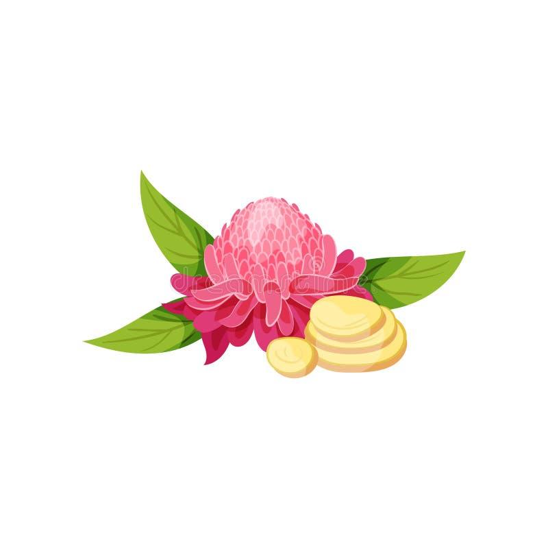 Den rosa ljust rödbrun blomman med gröna sidor och skivor av rotar grönsaker för rad för mat för bönamorotblomkålar naturliga Org stock illustrationer