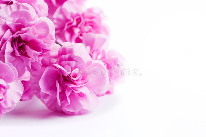 Den rosa mjuka våren blommar buketten på vit bakgrund royaltyfri foto