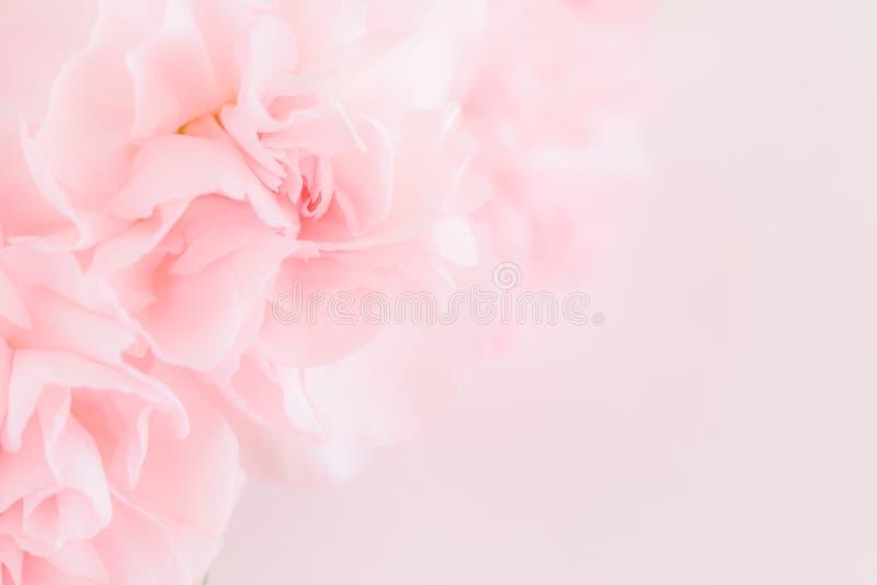 Den rosa nejlikan blommar buketten Mjukt filter royaltyfri bild