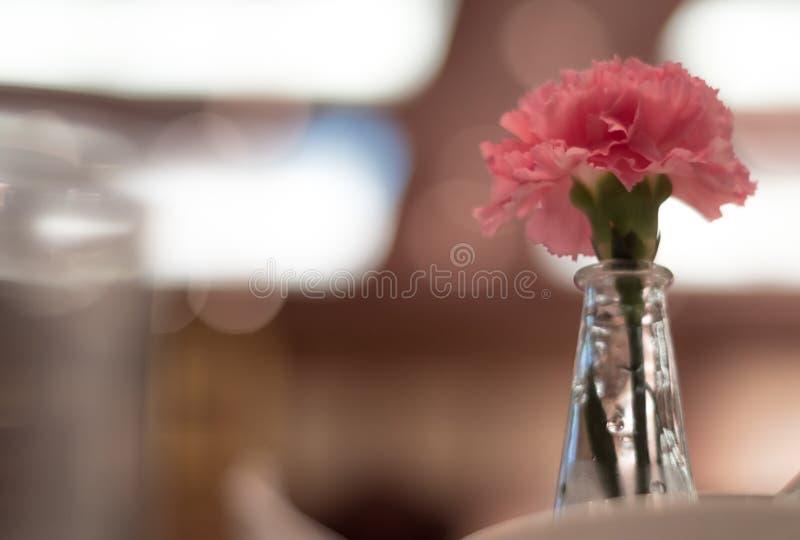 Den rosa nejlikan smyckade i tunna glass vaser som förlades på en äta middag ta arkivbild