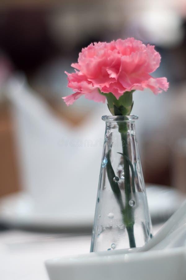 Den rosa nejlikan smyckade i tunna glass vaser som förlades på en äta middag ta arkivfoton