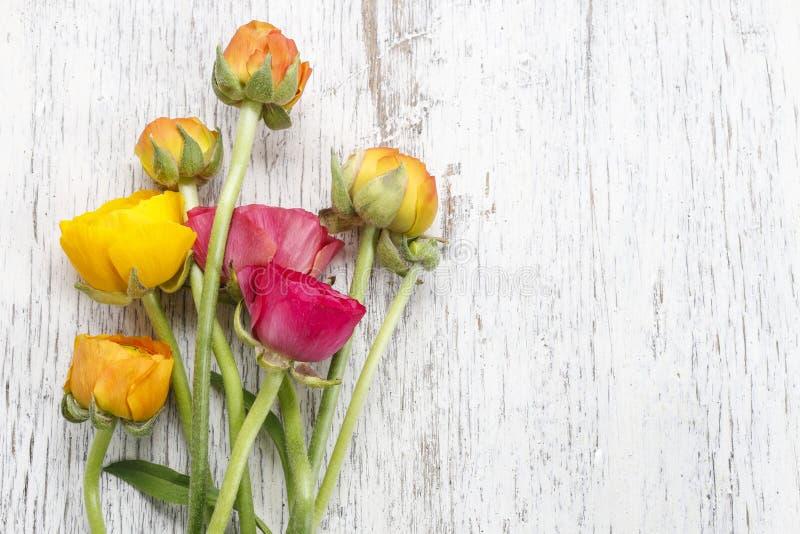 Den rosa persiska smörblomman blommar (ranunculusen) på vitt trä arkivfoton