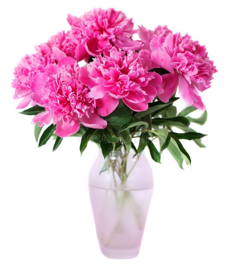 Den rosa pionen blommar i vase royaltyfri fotografi