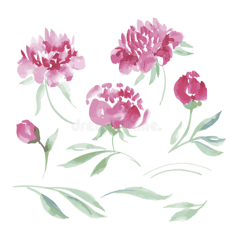 Den rosa pionvattenfärgen blommar satsen för design royaltyfri illustrationer