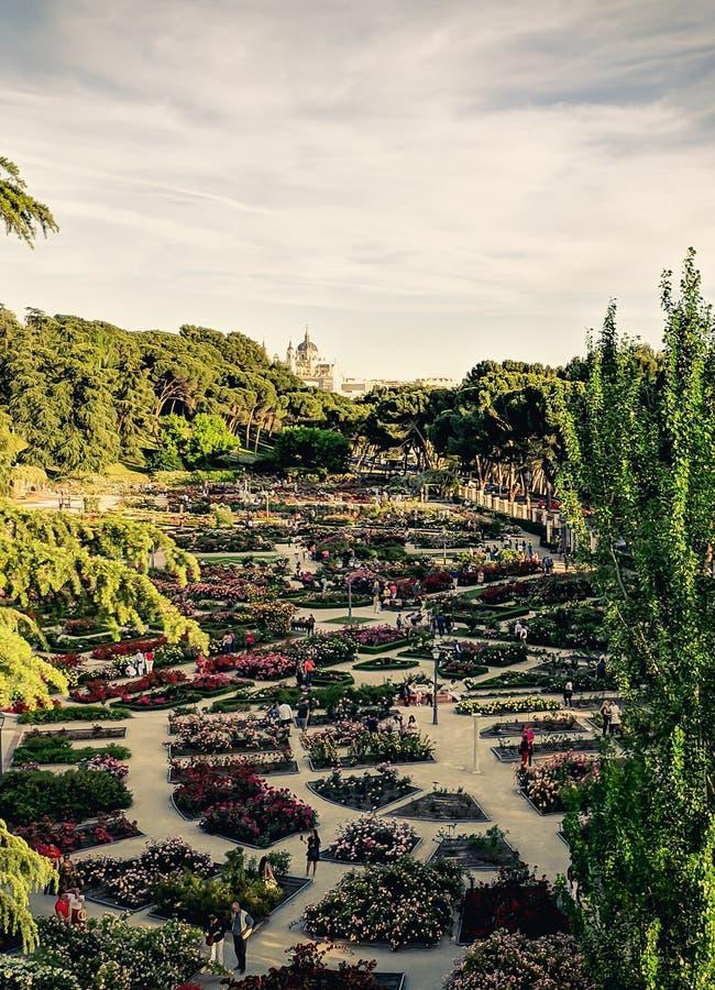 Den rosa tr?dg?rden parkerar med den kungliga slotten av Madrid arkivbilder
