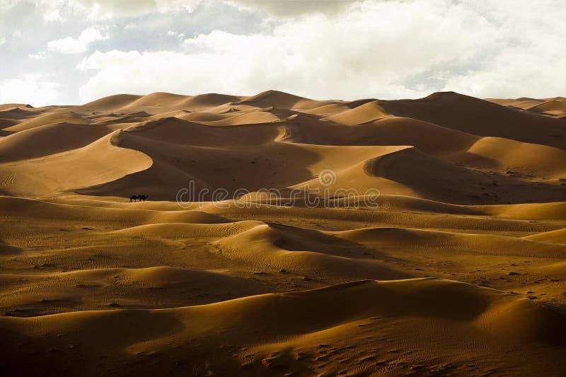 den russia för kurshskayaen för dynhorisontkosaen sanden går sträcka till royaltyfri fotografi