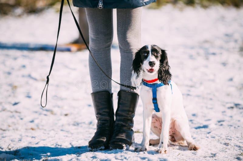 Den ryska spanielhunden sitter nära ägare under royaltyfri foto