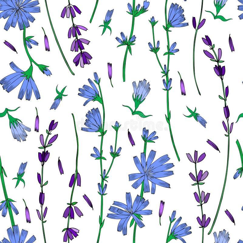 Den sömlösa blom- vektormodellen, cikorien, drog färgrika illustrationen för lavendelblomman handen, klotterfärgpulver skissar is royaltyfri illustrationer