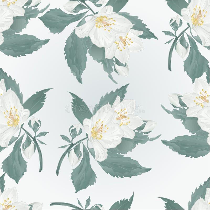 Den sömlösa texturjasmin och knoppar fjädrar blommavektorn vektor illustrationer