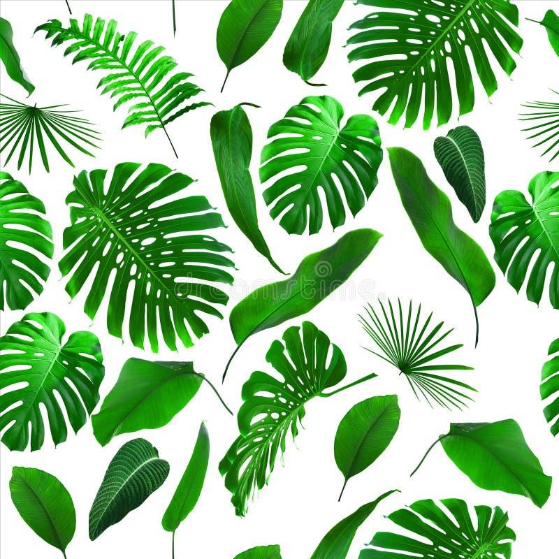 Den sömlösa tropiska djungeln lämnar bakgrund royaltyfri bild