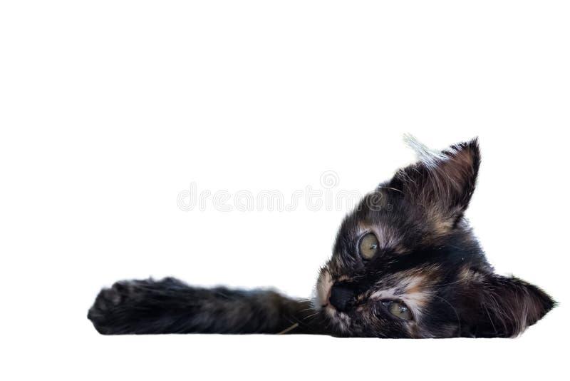 Den sömniga gulliga lilla svartbruntkattungen ligger ner på golvet arkivbild