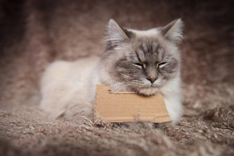 Den sömniga hemlösa katten som bär ett tecken, ser mycket ledsen arkivbilder