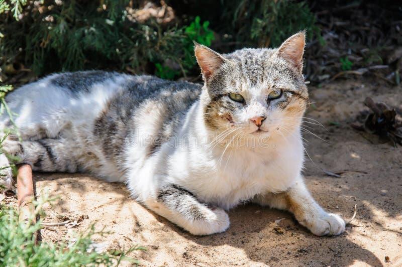Den sömniga hemlösa katten tycker om middagsolsken i trädgård arkivbilder