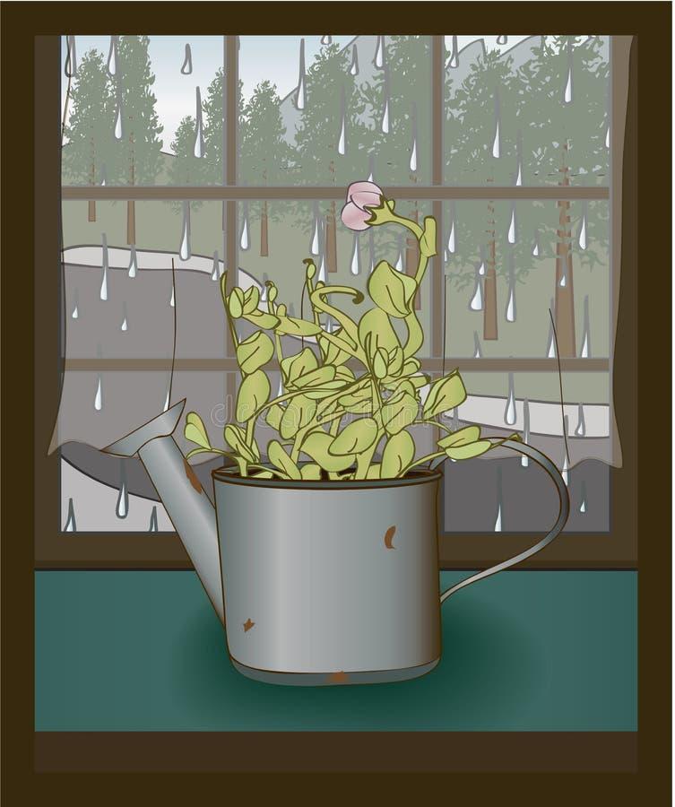 Den söta ärtaplantan i bevattna kan stock illustrationer