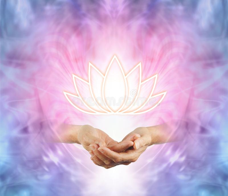 Den sakrala Lotus royaltyfria bilder