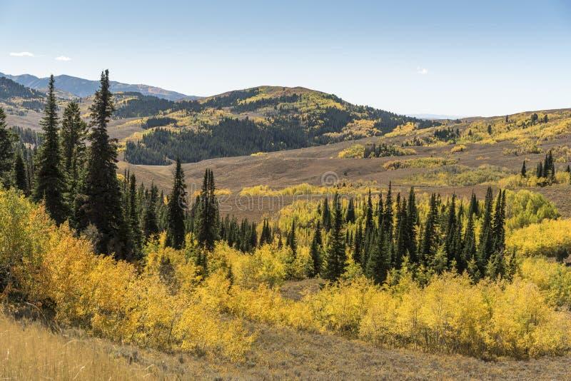 Den Salt River passerandelanderen klippte av Wyoming royaltyfri fotografi