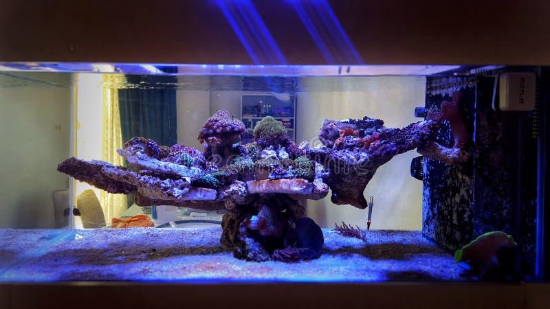 Den saltvattens- behållaren för akvariefisken för korallreven är en av den mest härliga hobbyen royaltyfria bilder
