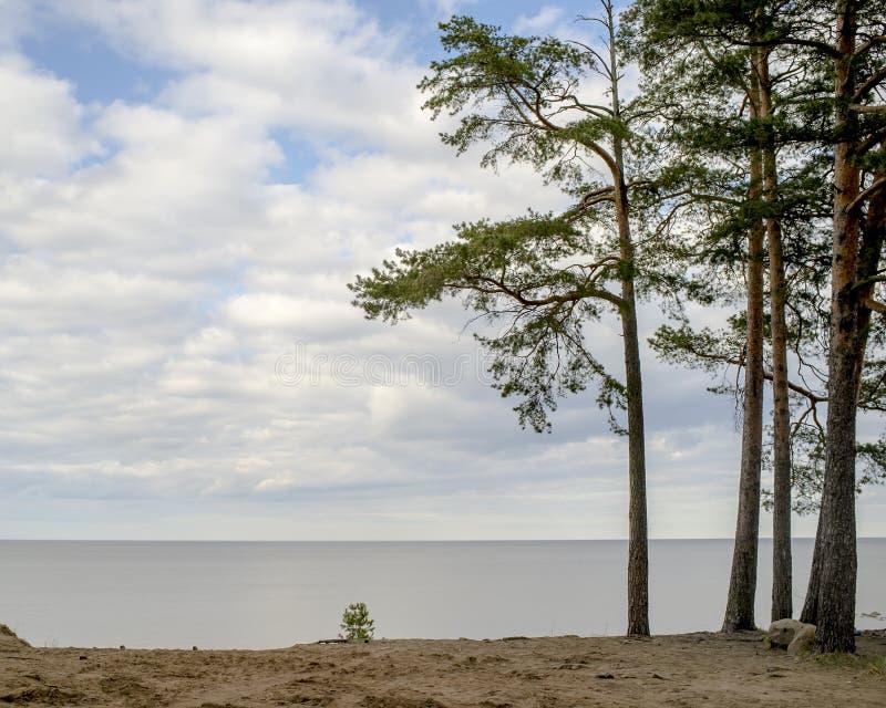 Den sandiga kusten av sjön och sörjer kall vårdag arkivfoton