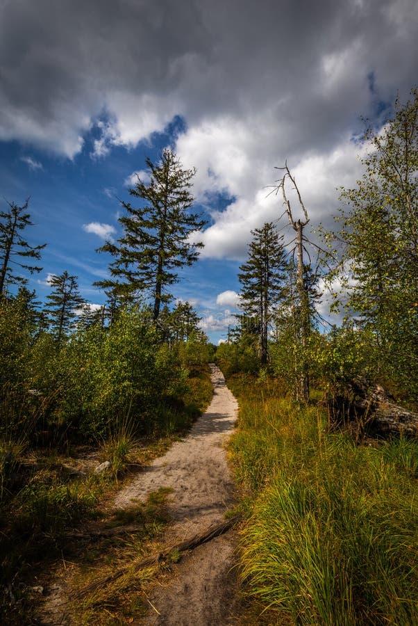Den sandiga vandringsledet, i grön skog med dramatisk blå molnig himmel, till stenar labyrinten Bledne skaly i Szczeliniec Wielki arkivfoton