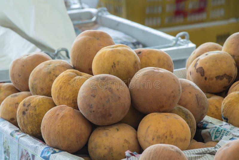 Den Sandoricum koetjapesantolen eller cottonfruit är en tropisk frukt som är fullvuxen i South East Asia royaltyfri fotografi