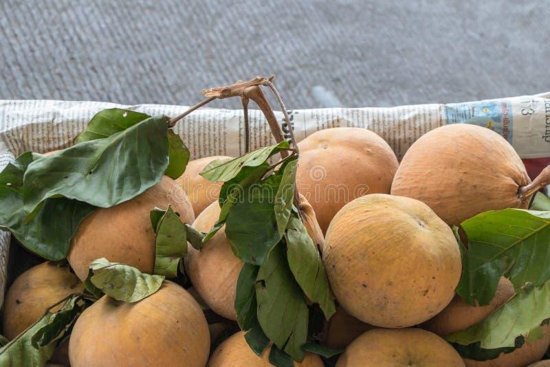 Den Sandoricum koetjapesantolen eller cottonfruit är en tropisk frukt som är fullvuxen i South East Asia royaltyfria bilder