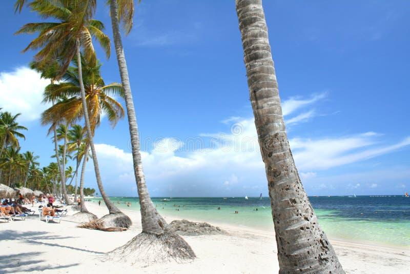 den satte fransar på stranden gömma i handflatan tropiska semesterorttrees arkivfoton