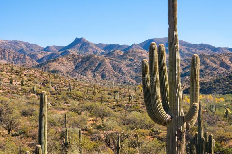 Den sceniska och historiska bergsikten på den Apache slingan Arizona, det röda kaktuslandskapet vaggar bildande royaltyfria foton