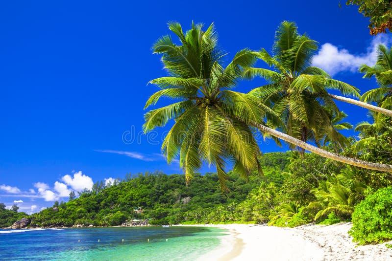 den sceniska stranden med kokosnöten gömma i handflatan arkivfoton