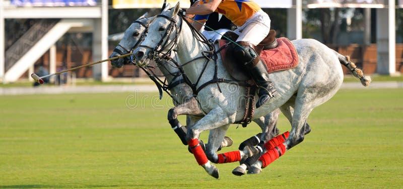 Den selektiva fokusen hästen som samtidigt kör, polospelarna, rider deras hästar under en match, full hastighet för 2 häst i polo fotografering för bildbyråer