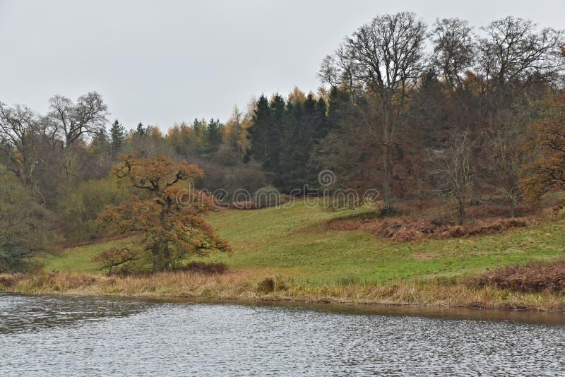 Den sena Autumn Forest och floden Glyme i Cotswoldsen parkerar nästan den Blenheim slotten royaltyfria foton