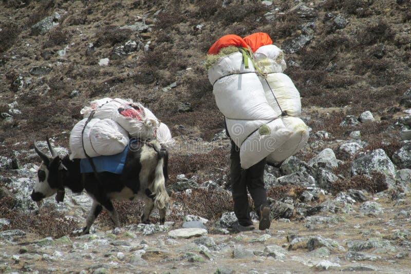 Den Sherpa portvakten bär korgen i Nepal den trekking banan royaltyfri foto
