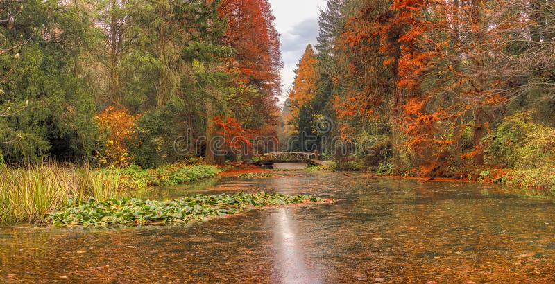 Den Simeria arboretumsjön parkerar in arkivfoton