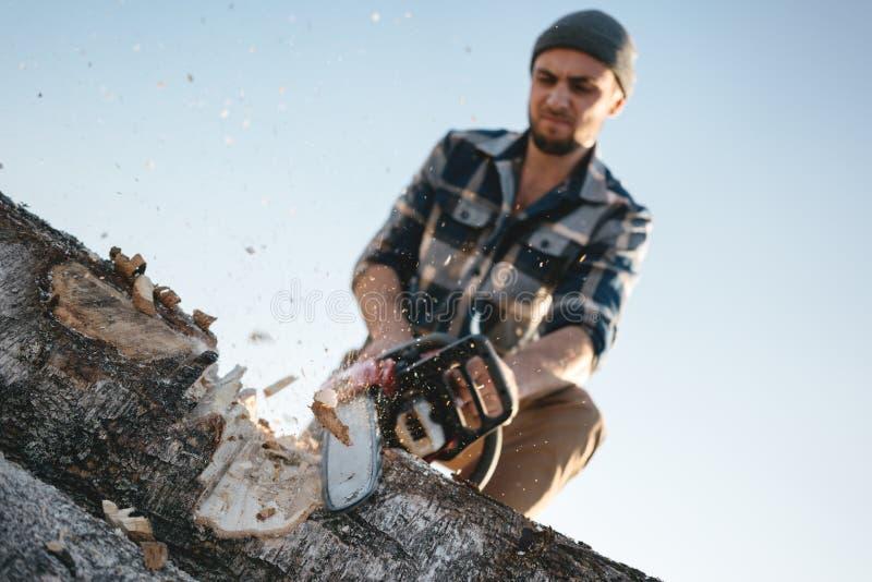 Den skäggiga brutala skogsarbetarearbetaren såg trädet med en chainsaw royaltyfri fotografi