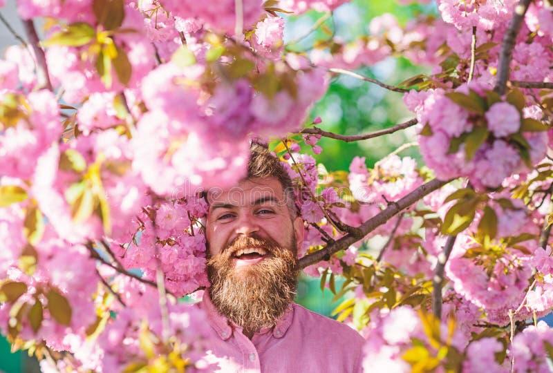 Den sk?ggiga mannen med stilfull frisyr med sakura blommar p? bakgrund Man med sk?gget och mustasch p? att le framsidan n?ra royaltyfri foto