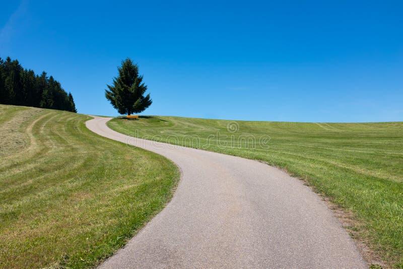 Den slingriga vägen leder till ett träd och en bänk i avståndet, den svarta skogen, Tyskland arkivbilder